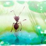 la-petite-fourmi